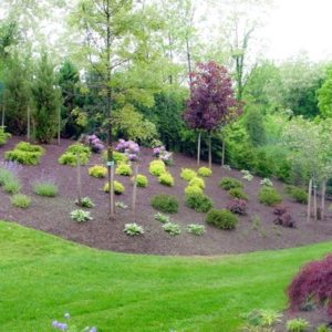 Large Tulsa OK Landscape Area Featuring Trees, Bushes & Plants
